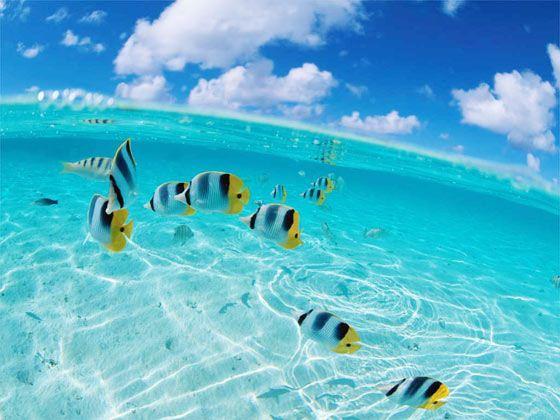【超值特惠】百变马尔代夫【天堂岛】4晚6天自由行 二次确认 遨游推荐