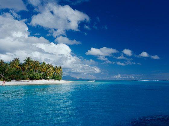 波拉波拉岛丛林