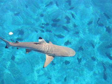 壁纸 动物 海底 海底世界 海洋馆 水族馆 鱼 鱼类 360_270