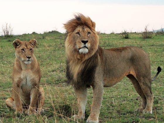动物大迁徙-肯尼亚8日游(阿提哈德航空)
