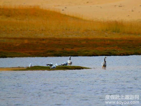 【金品喀纳斯】乌鲁木齐,喀纳斯湖,吐鲁番,天池双飞八日游 二次确认