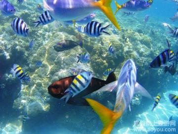 壁纸 海底 海底世界 海洋馆 水族馆 360_270